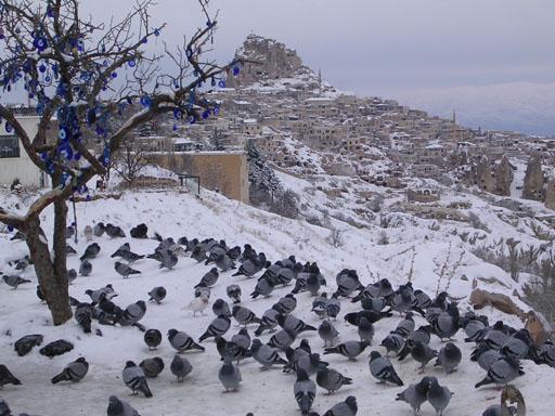 野良鳩とウチヒサールの町