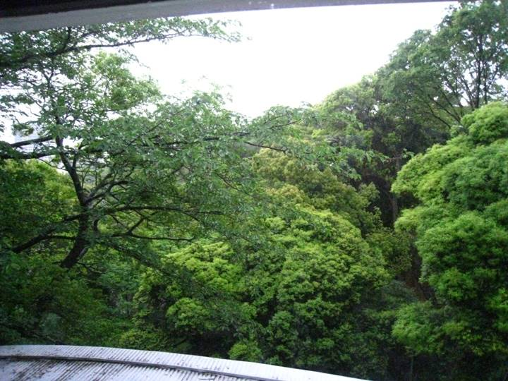 窓から見える美しい風景