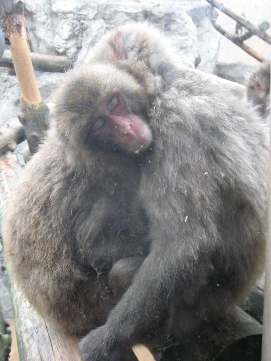抱き合って眠るお猿さん