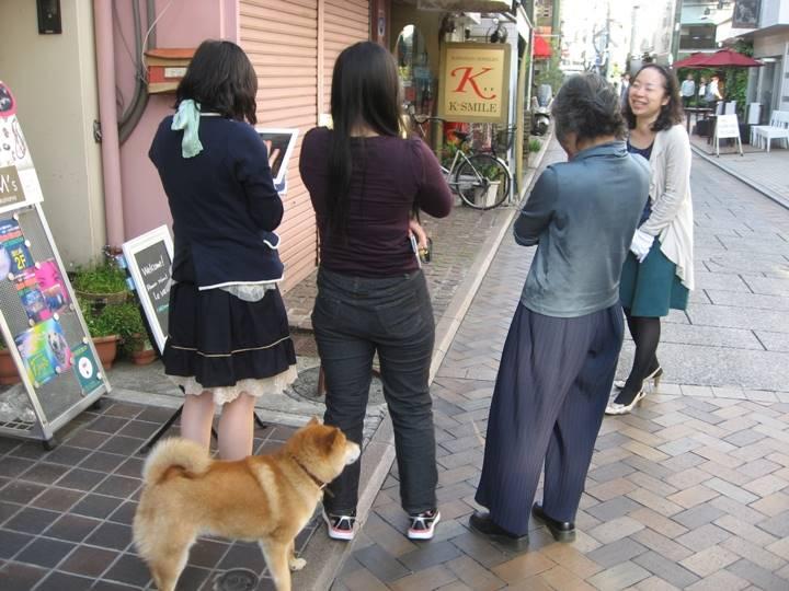 柴犬も作品鑑賞