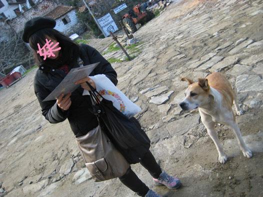 シレンジェの野良犬さん