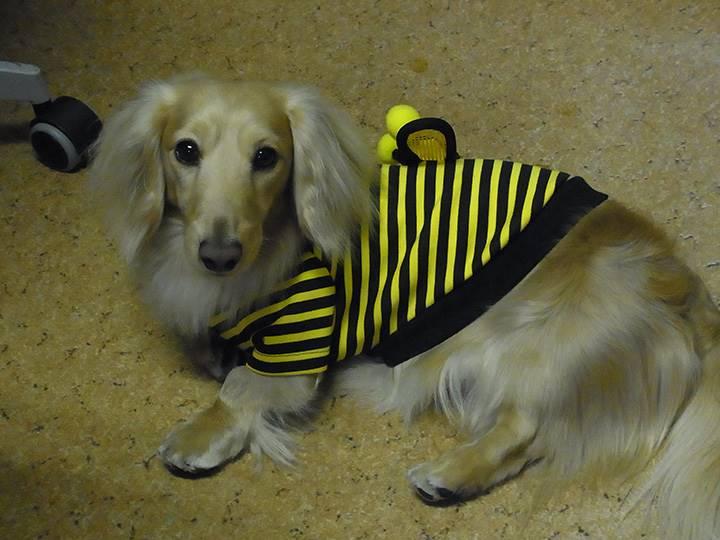 ミツバチのコスチューム***