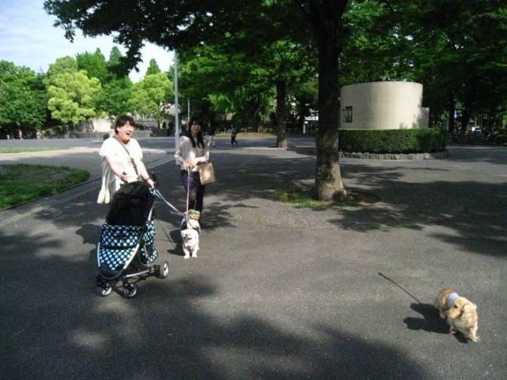 看板犬じゅん君も一緒にお散歩 ・・・。