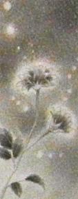 「月と花」 右側作品