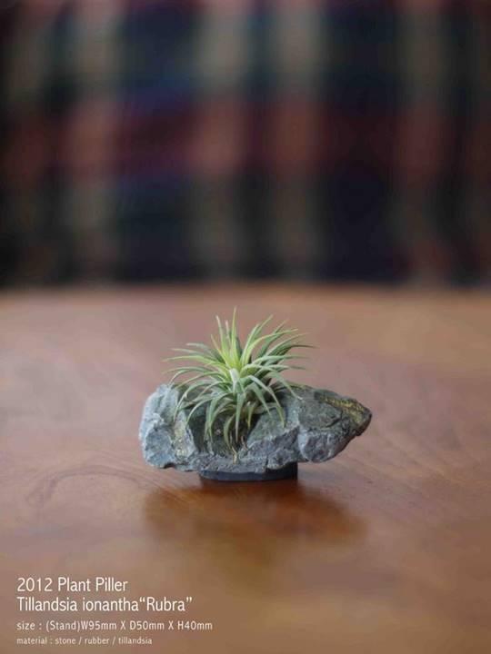 Plant Stone2