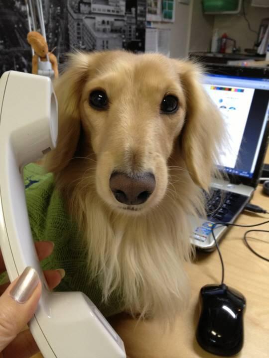 皆さんにお電話します!