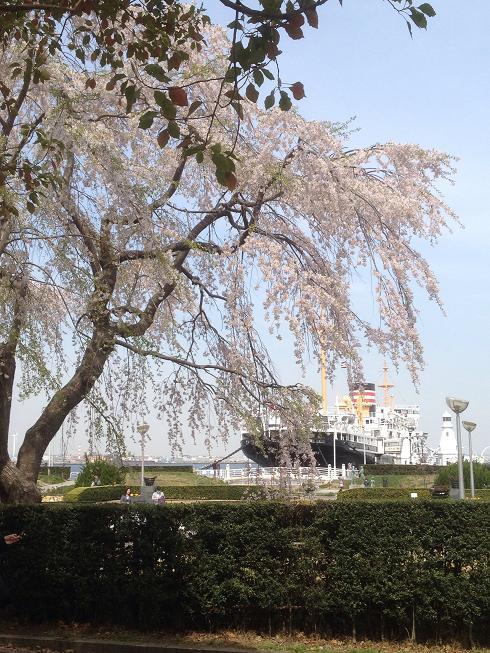 桜のある港街、横濱。