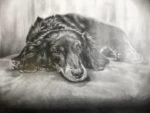 ペット肖像画「鉛筆画」完成作品