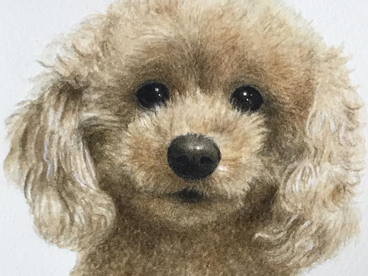 ペット肖像画:水彩