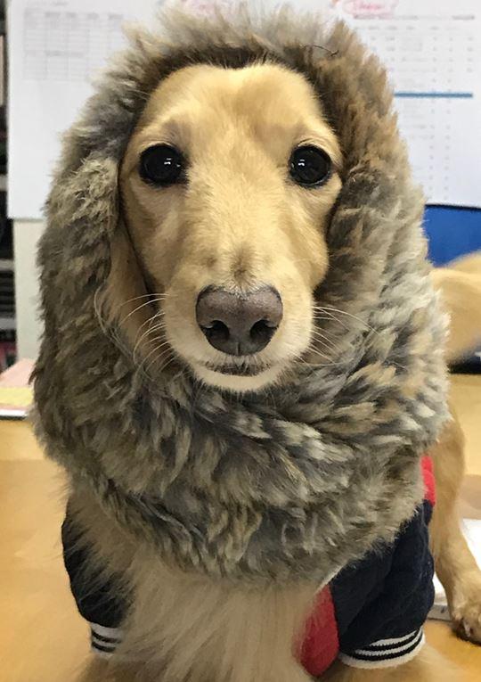 フジムラコンテンポラリーアート看板犬のじゅん写真