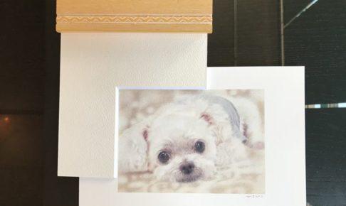 【ペット肖像画 作品例】色鉛筆画1:マルプー
