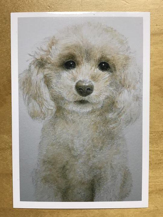 【ペット肖像画 作品例】水彩画1:トイプードル