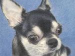 ペット肖像画:色鉛筆画
