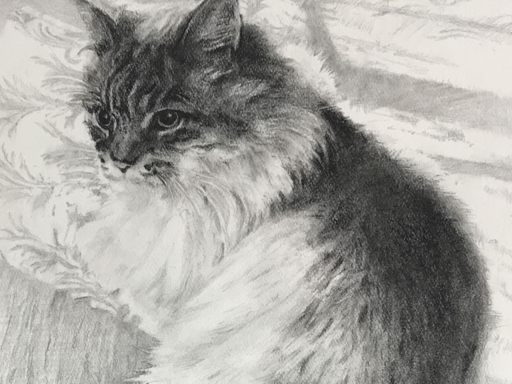 ペット肖像画:コンテ擦筆画