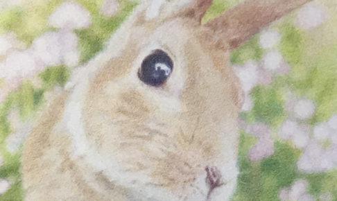 【ペット肖像画 作品例】色鉛筆画