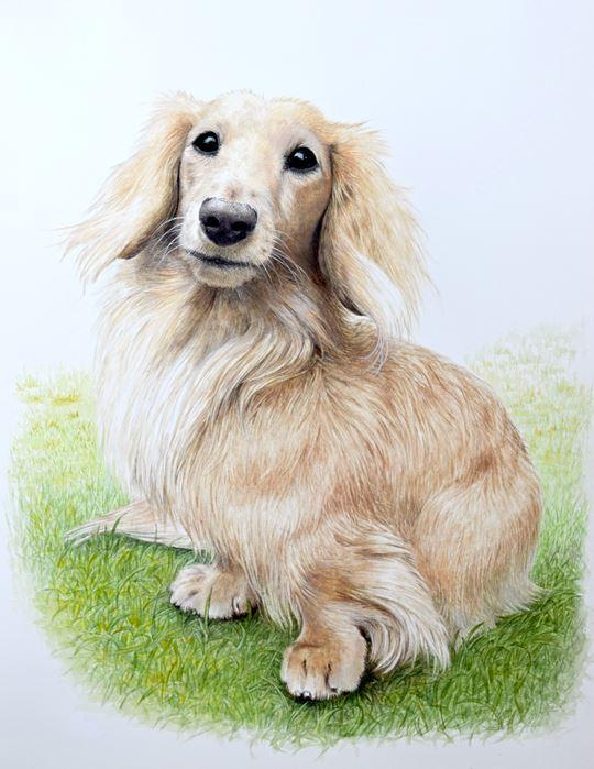 フジムラコンテンポラリーアートの看板犬の作品