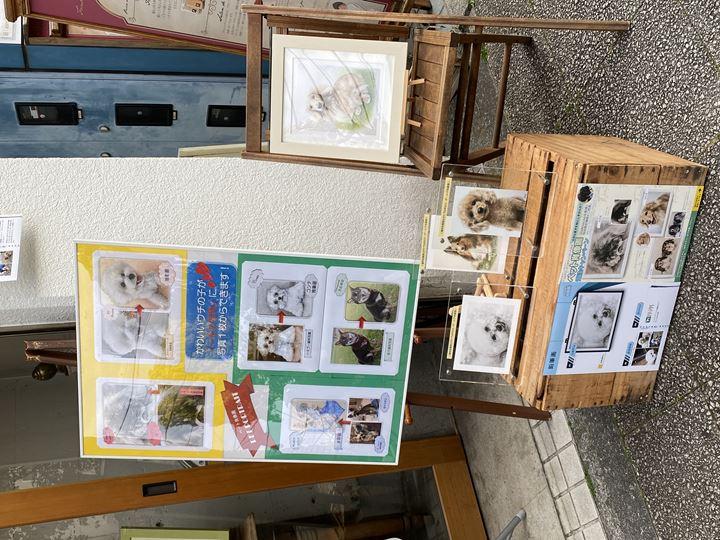 スターチャイルドさんで店頭設置しているペット肖像画の見本作品