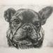 【ペット肖像画 作品例】鉛筆画1:フレンチブルドッグ
