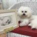 ペット肖像画 受注会2018のご協力店① Dog Care House Motomachi様
