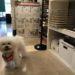 ドッグケアハウスの看板犬が「ペット肖像画 受注会2018」展に来店★